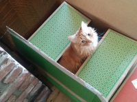 Pet-sitter-loving